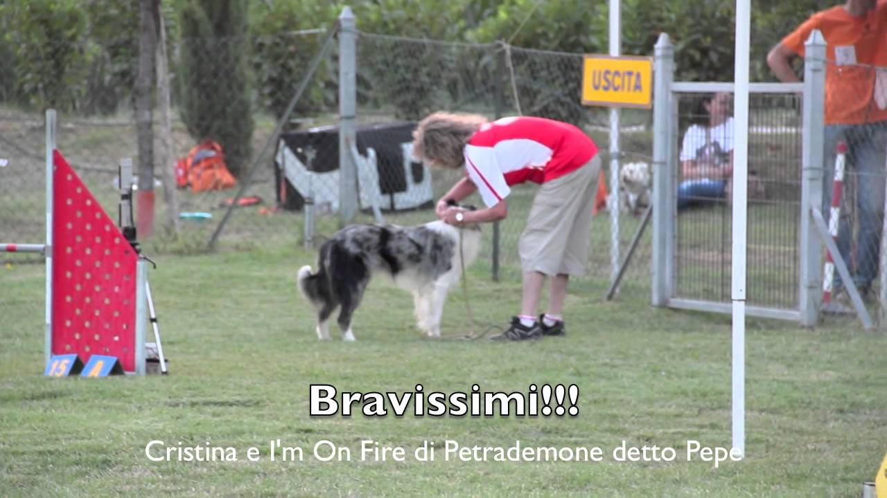 I'm on fire di Petrademone border collie prime gare luglio 2012