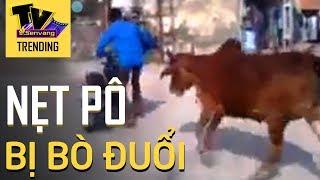 Quái xế nẹt bô xe máy bị cả đàn bò rượt đuổi