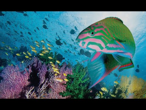 Coral Sea Dreaming - Awaken