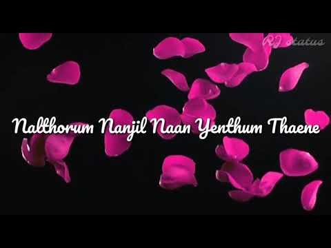 Poove sem poove song lyrics| Download👇 |Solla thudikkuthu manasu |Tamil whatsapp status |RJ status