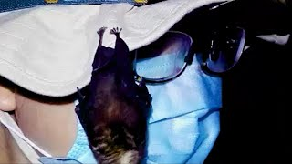 WORLD EXCLUSIVE: Footage proves bats were kept in Wuhan lab