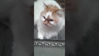 Мой мягкий и жирный кот