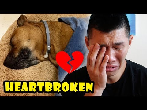 HEARTBROKEN OVER DOG NEWS: Goodbye Bentley || Life After College: Ep. 572
