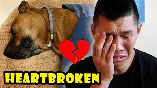 HEARTBROKEN OVER DOG NEWS: Goodbye Bentley || Life After College: Ep. 572