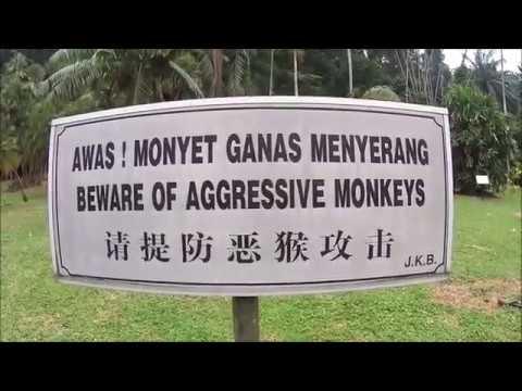Penang Botanical Gardens, Malaysia (LW81)