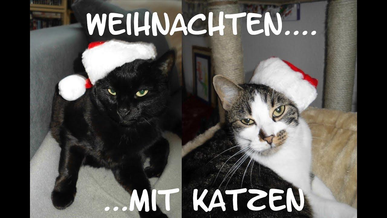Crazy Cat´s : Katze(n) - Süsse Weihnachts Katzen!!! Woran