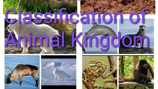 CLASSIFICATION OF ANIMALS : EASIEST WAY TO LEARN THE CLASSIFICATION OF ANIMAL