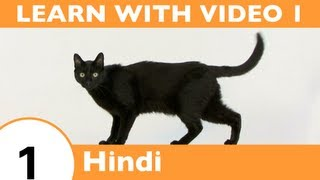 Learn Hindi with Video - Learning Hindi Vocabulary for Common Animals Is a Walk in the Park!
