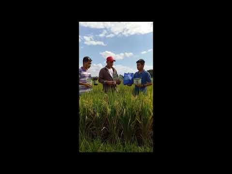 Nextgen Global Alliance Corp. Rice Testimony