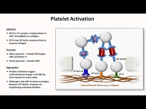 Hemostasis: Lesson 2 - Platelet Activation and Aggregation