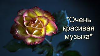 *Очень красивая музыка*  *Самая лучшая музыка для души* + цветы