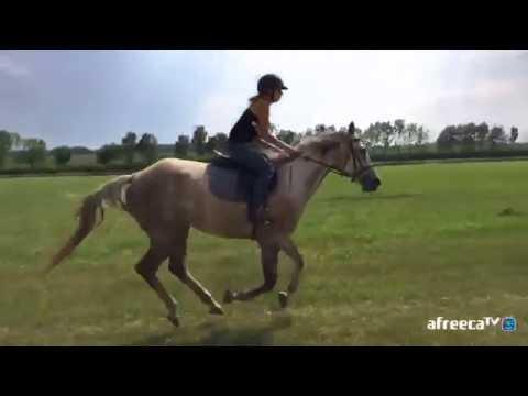 [꾼맨] 해외 유럽 체코 알렝꼬 꾼맨 야외 외승 승마 ! riding horse ! 구보 습보 canter
