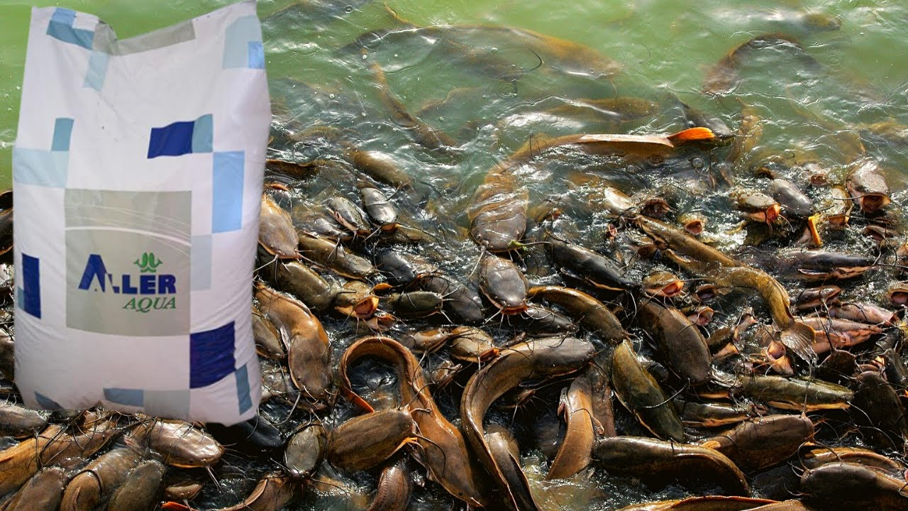 Download 5 Types Of Fish Feeds Brand   Fish Farming In Nigeria