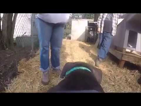 Fences For Fido - Un-chaining Bruce