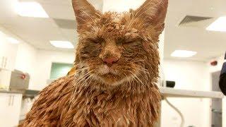 Kater bittet Fremden um Hilfe - den Tierarzt haut es fast aus den Latschen!