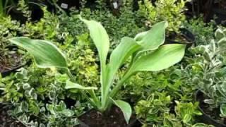 Многолетние цветы в Вашем саду!(С другими видео-лекциями по садоводству и мастер-классами флористов можно ознакомиться на Видео-Портале..., 2009-10-10T10:11:58.000Z)