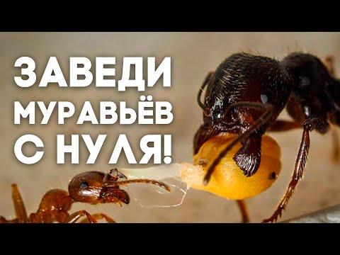 Вопрос: Каких муравьев купить мальчику 11 лет?
