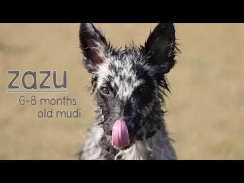 Zazu ~ 8 months