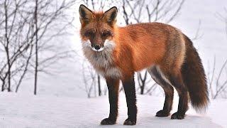 ANIMALES EN LA NIEVE - no importa el frio ellos lo disfrutan