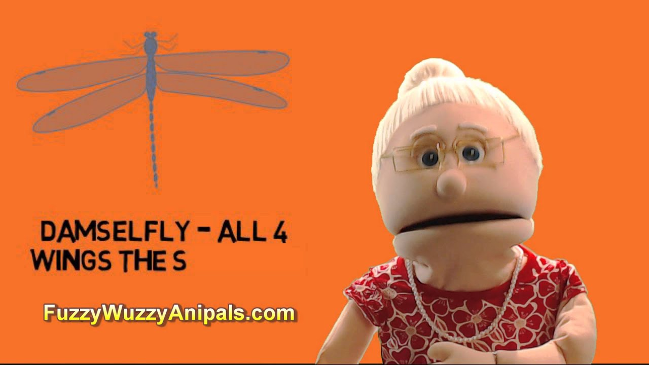 Difference Between a Dragonfly and Damselfly - Animal Facts - YouTube
