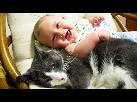 Babies Play With Dog,Cat - Funny Moment | World Pet TV