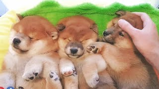 how-to-put-puppies-to-bed