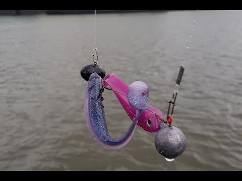 Raubfischangeln - Zanderangeln auf der Elbe - Bootstour Hamburg