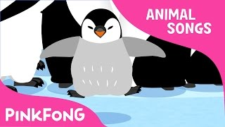 Waddle Emperor Penguin   Penguin   Animal Songs   Pinkfong Songs for Children