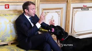 Macron's dog pees in Elysee meeting
