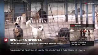 """В Москве проверяют приют для собак """"Дубовая роща"""" после избиения дворняги"""