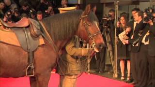 War Horse on the Red Carpet (Royal London Premiere)