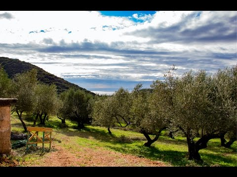 Making Olive Oil in Kefalonia, Greece