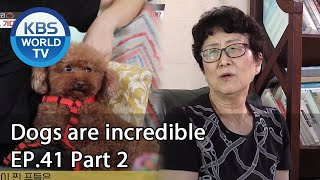 Dogs are incredible | 개는 훌륭하다 EP.41 Part 2 [SUB : ENG/2020.09.02]