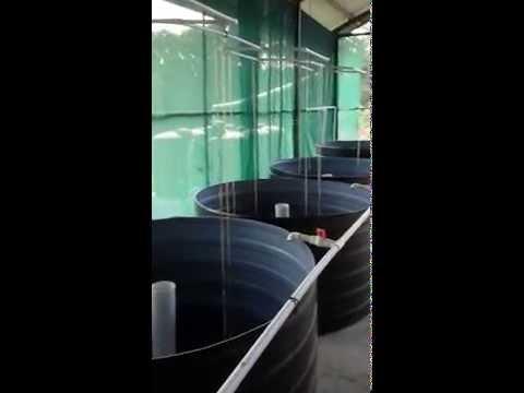 Recirculating Aquaculture System Trinidad (Toco)