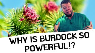 Burdock Cures EVERYTHING! But Why?