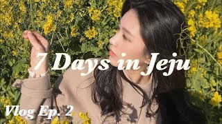 Vlog #7 | 7 Days in Jeju ep.2 …