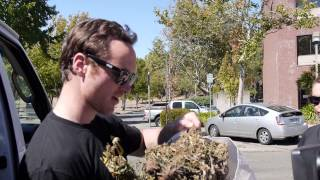 Vallejo PD returns Cannabis to Shotwell -- 8/29/13