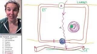 Transport 9- Epithelial transport