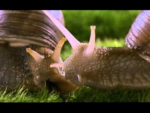 Microcosmos - l'Amour des Escargots
