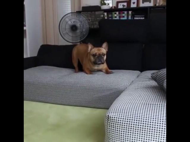 Dogs Bubble Burst