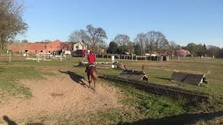 5 year old mare by Perigueux X Contendro schooling X-country