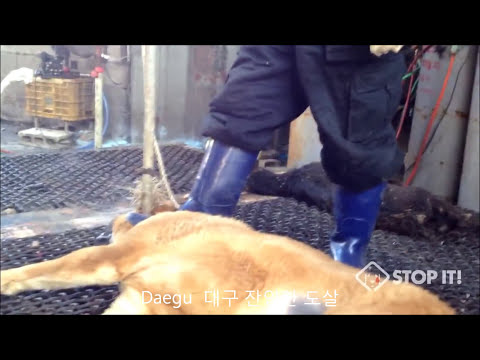 South Korea's Shocking Cruelty and Brutality - 2.5 Million Slaughter Every Year!!! from YouTube · Duration:  4 minutes 45 seconds