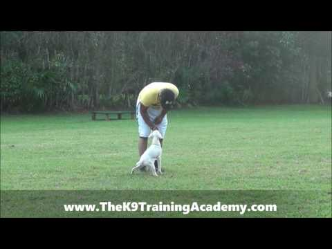Puppy Kinder - Potty Training - Sit - Leash breaking - The K9 Training Academy