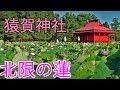 【和蓮】北限の蓮 猿賀神社の蓮を見て来た【イベント】