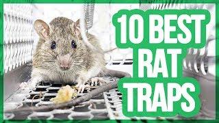 Top 10 Best Mouse Trap / Rat Trap