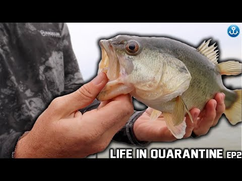 Life in Quarantine: Episode 2 - Aluminum boat saves the day