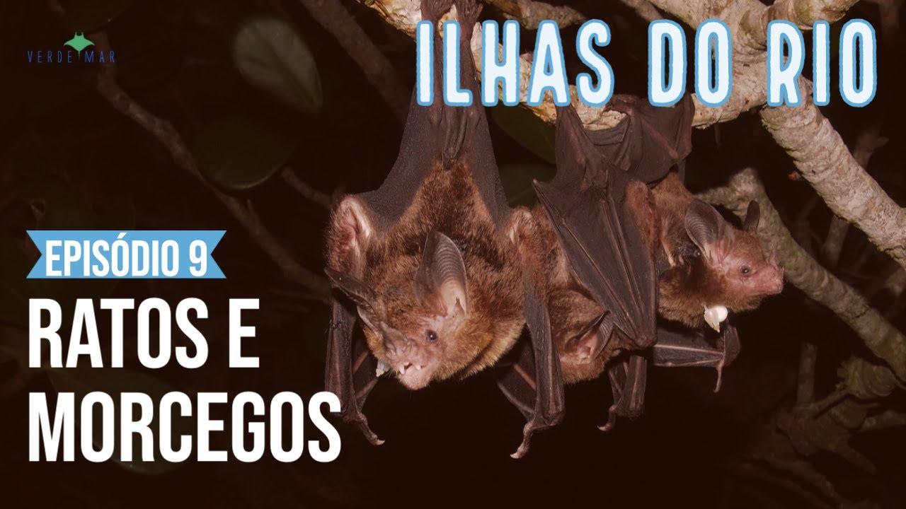 Ratos e morcegos nas Ilhas Cagarras? - Webserie Ilhas do Rio Ep. #9
