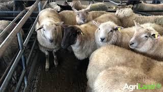 loughrea mart羊销售