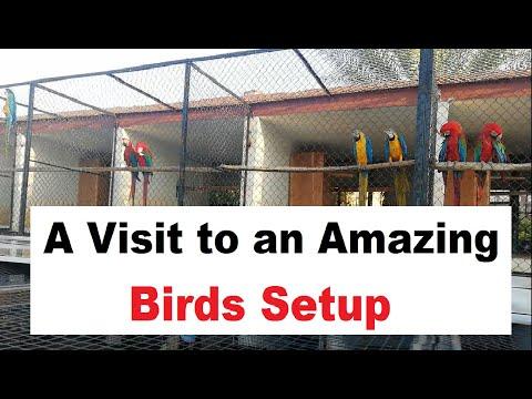 Amazing Birds Aviary Visit, Video By    Waqas Mahmood    #birdsofparadise