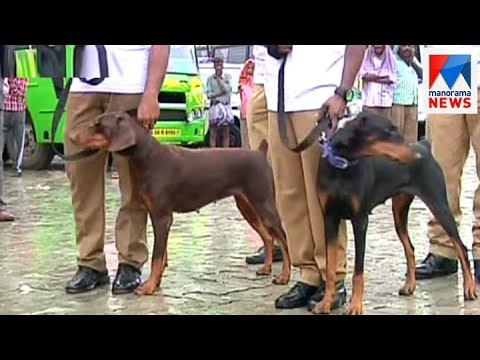 Specially trained dogs for law and order handling in Kochi | Manorama News